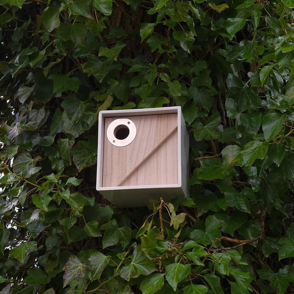 Urban bird box