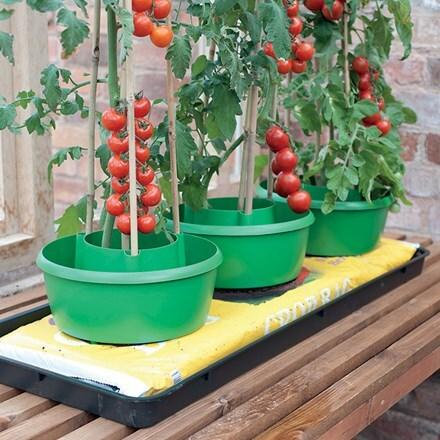 Green plant halos set of 3