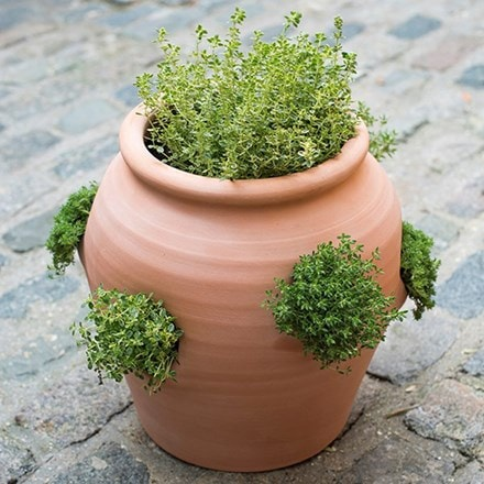 Terracotta herb pot/strawberry pot