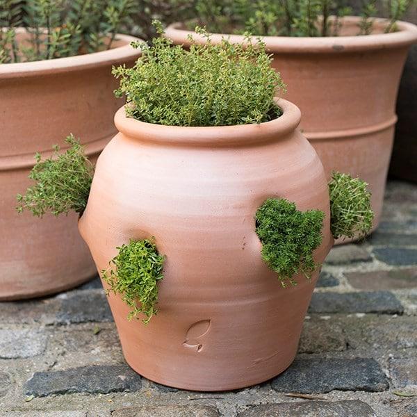 Buy Terracotta Herb Pot