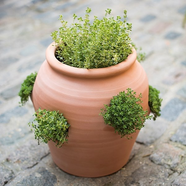Terracotta herb pot/strawberry pot