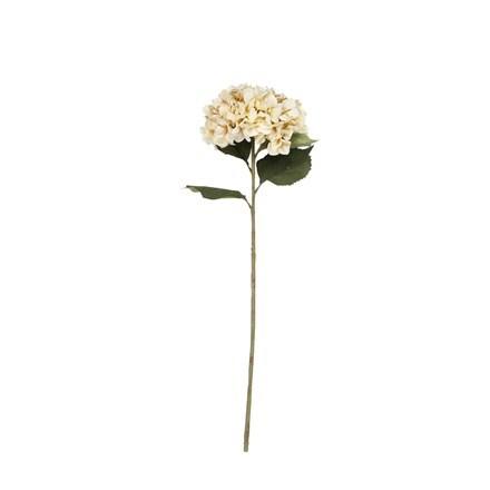 Antique giant hydrangea stem