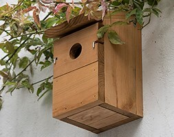 Everyday multi nest box