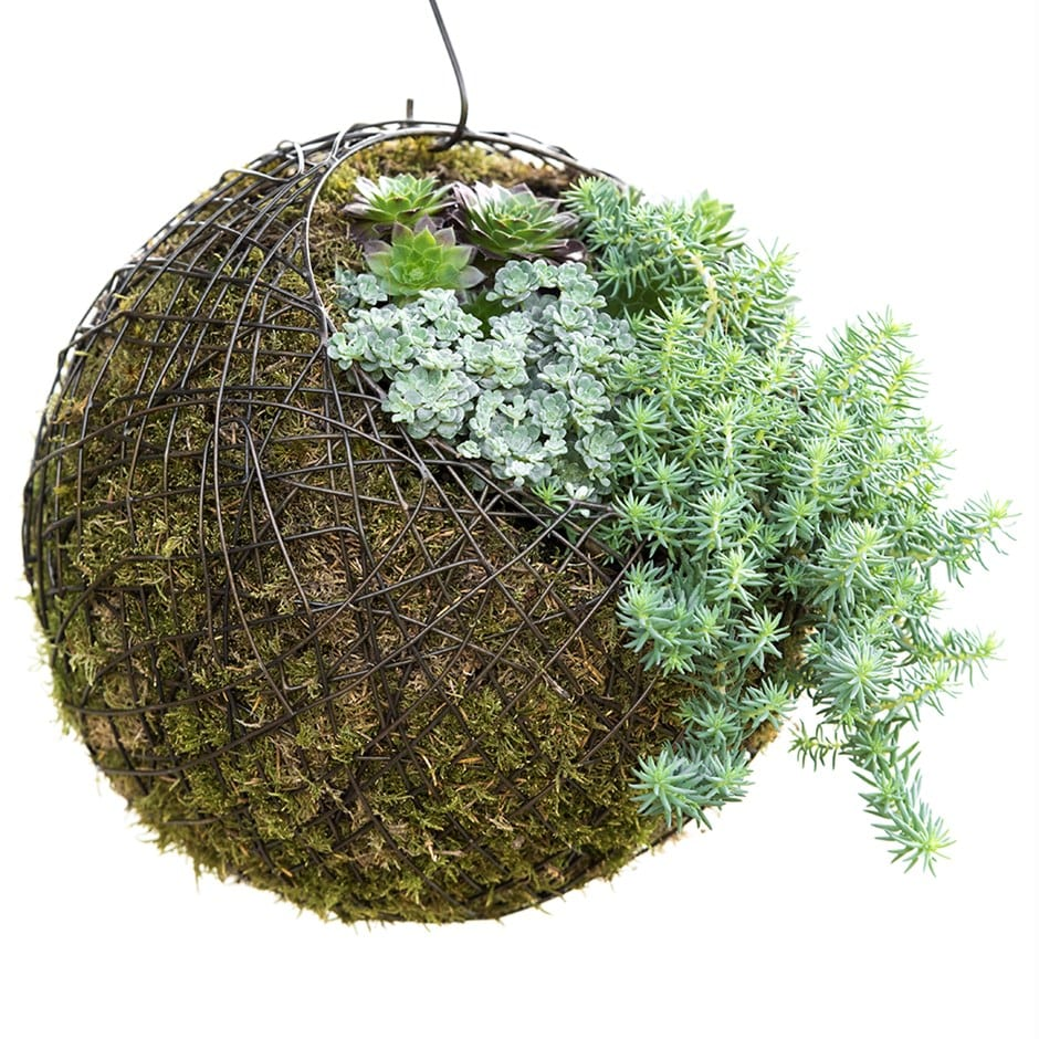 Buy Hanging crazy wire ball: Delivery by Waitrose Garden in ...