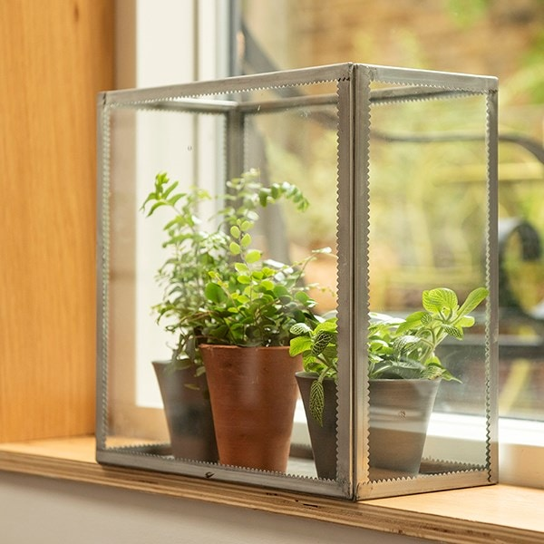 Wall mounted/windowsill plant terrarium