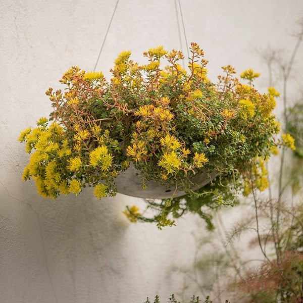 Hanging sphere planter