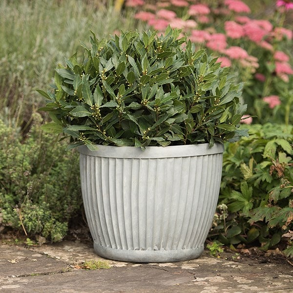 Galvanised dolly pot