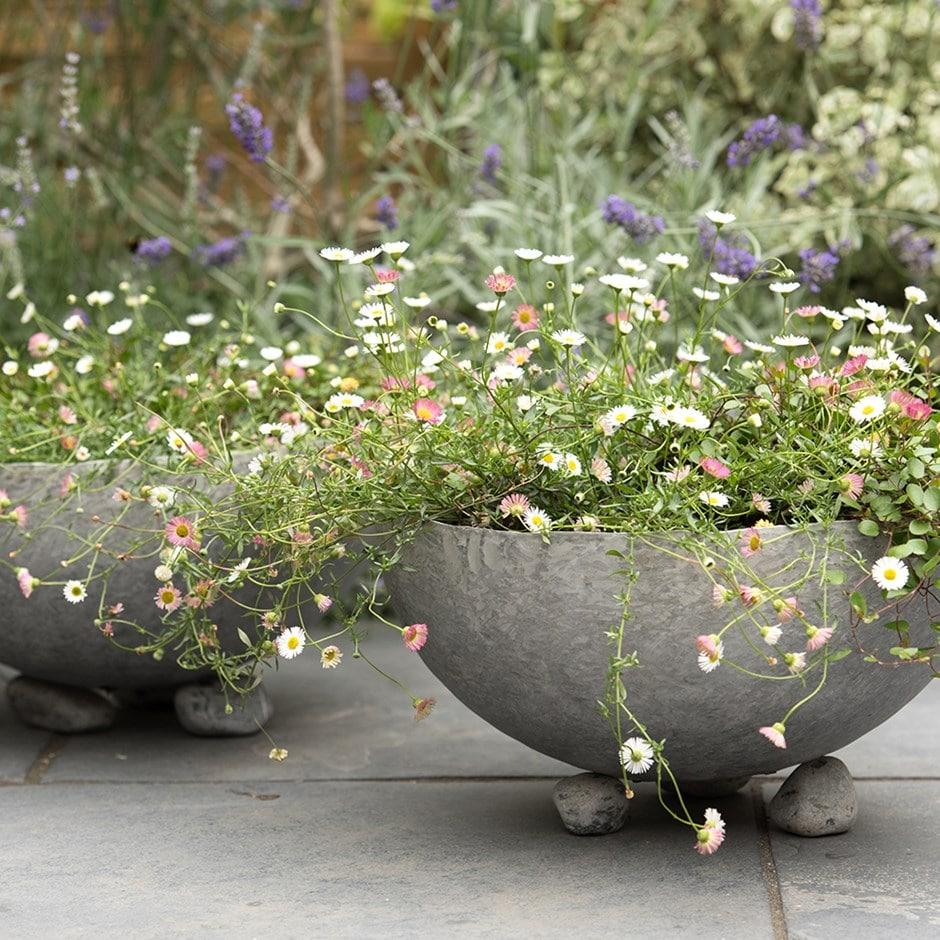 Buy Sphere Plant Bowl