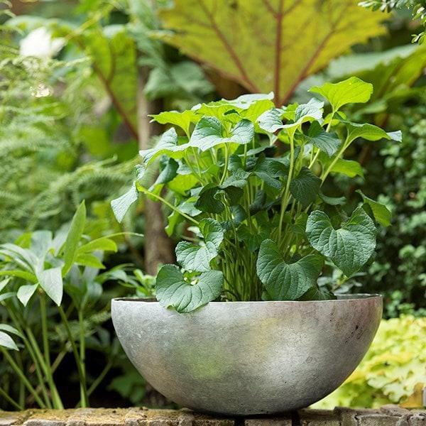 Sphere plant bowl