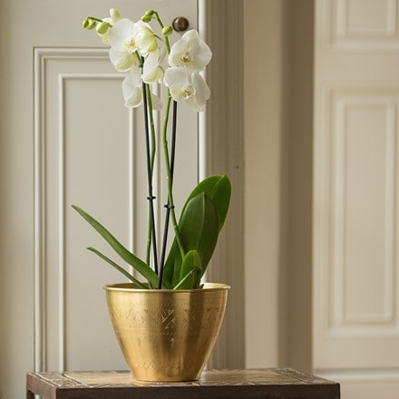 Solid etched brass pot cover