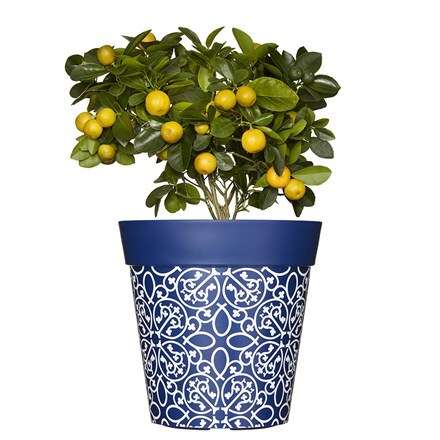 Blue lattice pattern pot