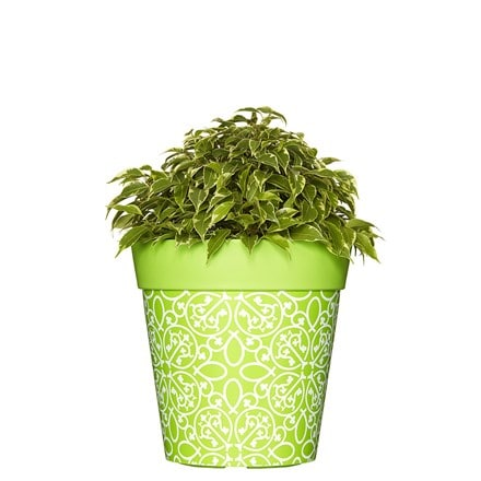 Green lattice pattern pot