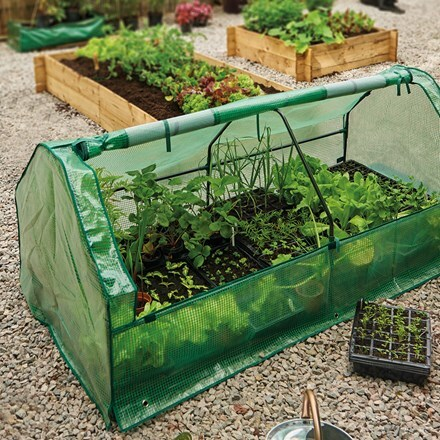 Seedling cloche with heavy duty cover