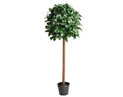 Artificial bay tree
