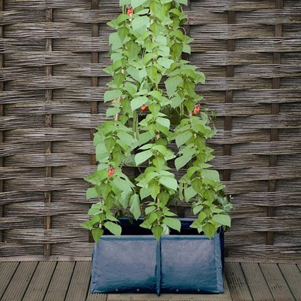 Pea and bean patio planter