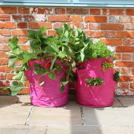 Strawberry and herb patio planter - two pack