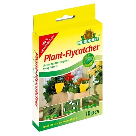 Plant flycatcher