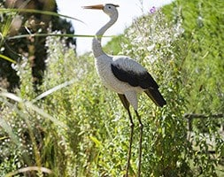 Ornamental tall heron