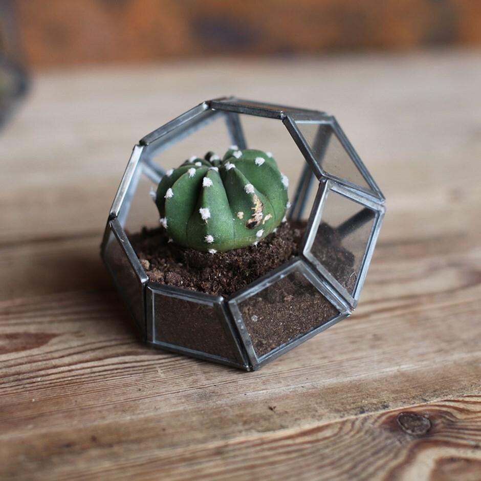 Aketa terrarium