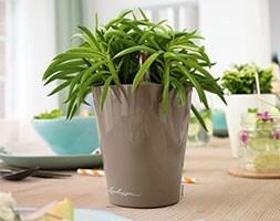 Lechuza Mini Deltini table planter