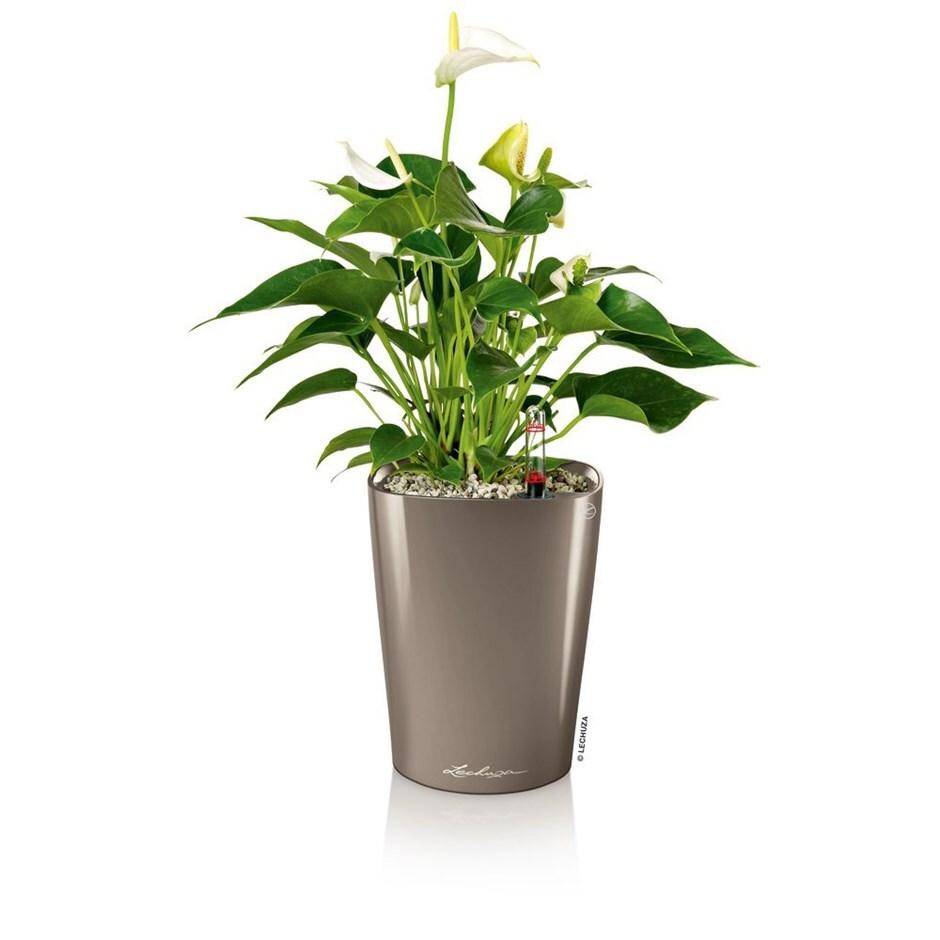Lechuza Deltini table planter