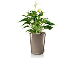 Lechuza Deltini table planter