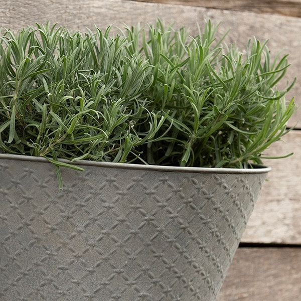 Aged embossed wall planter