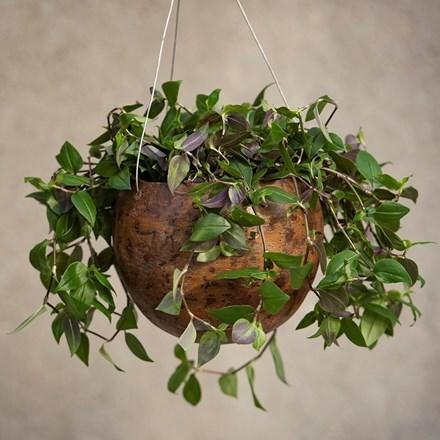 Hanging gourd bowl - large