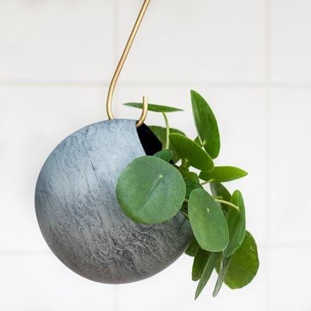 Sphere plant holder