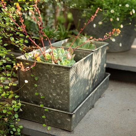 Two ribbed square planters and tray