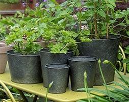 Single dark galvanised pot