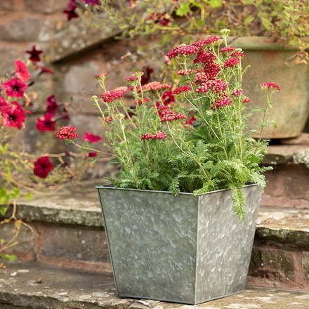 Dark galvanised rectangular planter