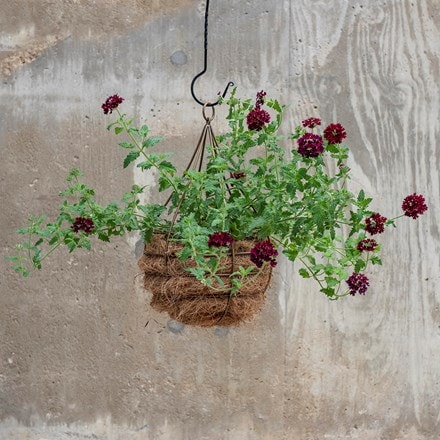 Hanging tear drop basket - wide