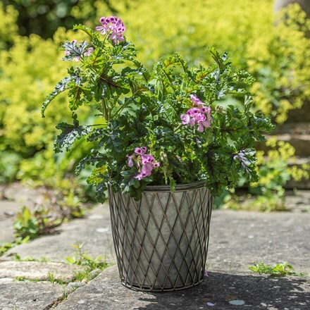 Lattice pot - diamond