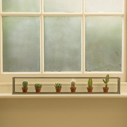 Windowsill terrarium