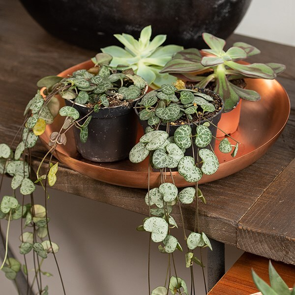 Round plant dish - brushed copper