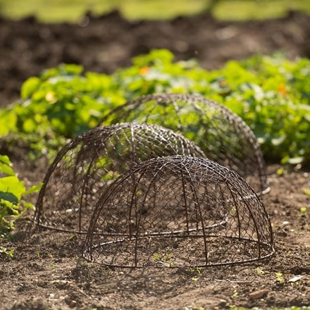 Set of 3 rabbit proof dome cloches - brown