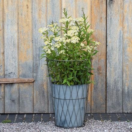 Planter in lattice basket surround