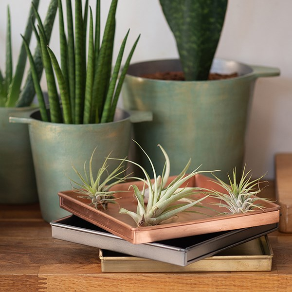 Shallow square tray