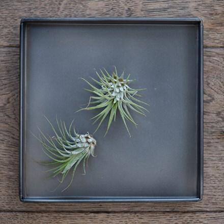 Square tray - zinc