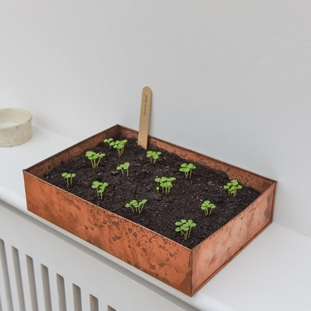 Brushed copper seed tray