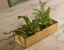 Brushed brass seed tray