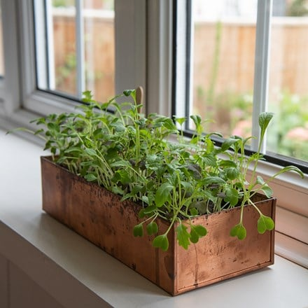Copper seed tray