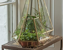 Terrarium with brass base tray