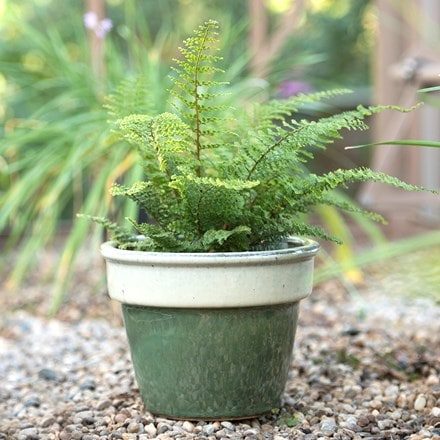 Two tone glazed pot - sage & cream