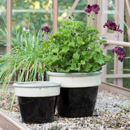 Two tone glazed pot - black & cream