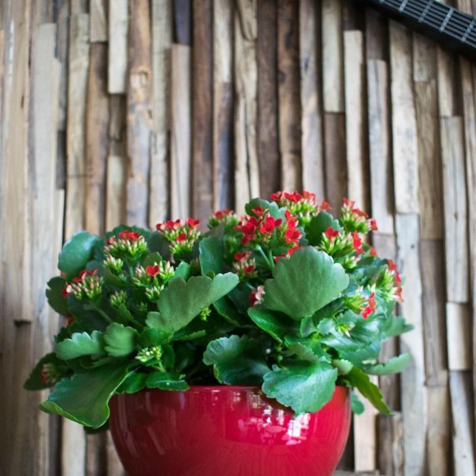 Planting bowl bordeaux