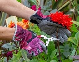 RHS Burgon and Ball British bloom gloves