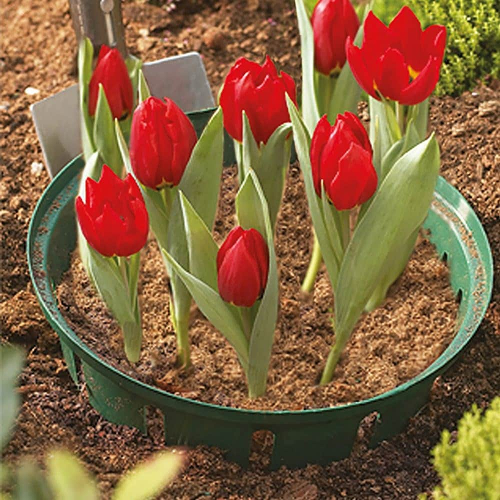 Bulb baskets round large - pack of 2