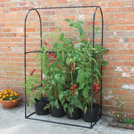 Tomato crop booster frame